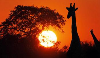 12-wd0809-Botswana-Africa.jpg