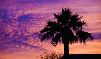 14-wd0809Phoenix-Arizona.jpg