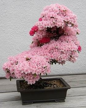 bonsai-tree-01.jpg