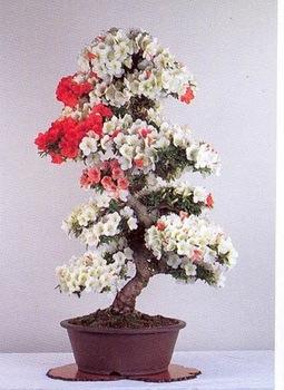 bonsai-tree-02.jpg