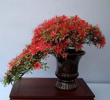 bonsai-tree-09.jpg