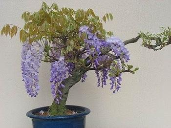 bonsai-tree-27.jpg