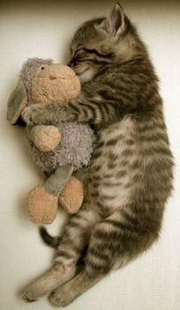 kitties_22.jpg