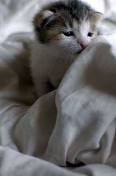 kitties_44.jpg