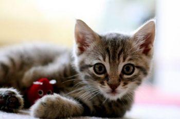 kitties_59.jpg