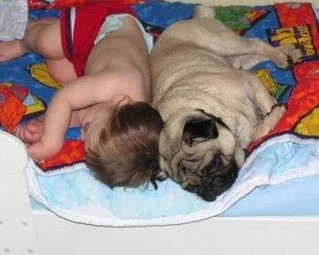 pets-and-babies-14.jpg